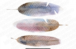 Hand Painted Watercolor Feathers