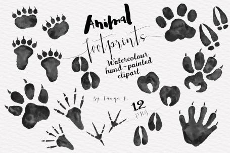 Foot Prints of Woodland Animals