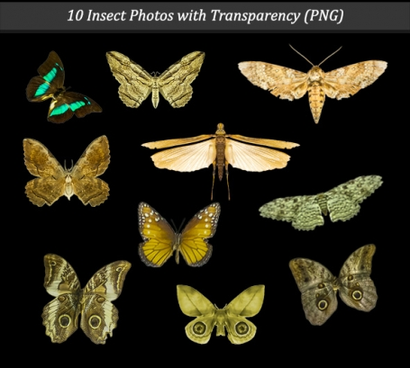 Insects Set with Transparency PNG